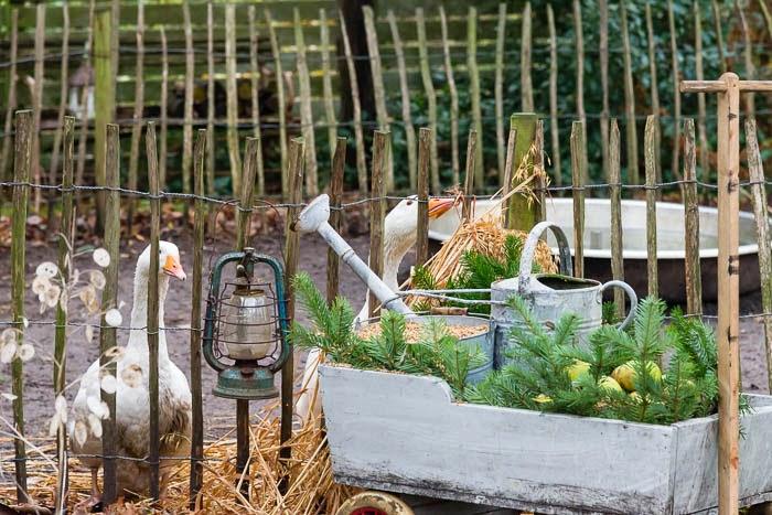My loving home and garden: på besøg i fru pedersens smukke julehave