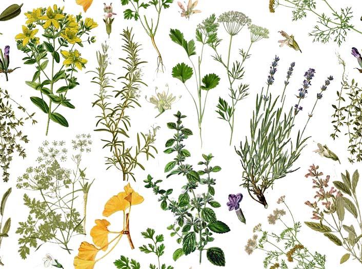 Freebies Botanical Wallpaper