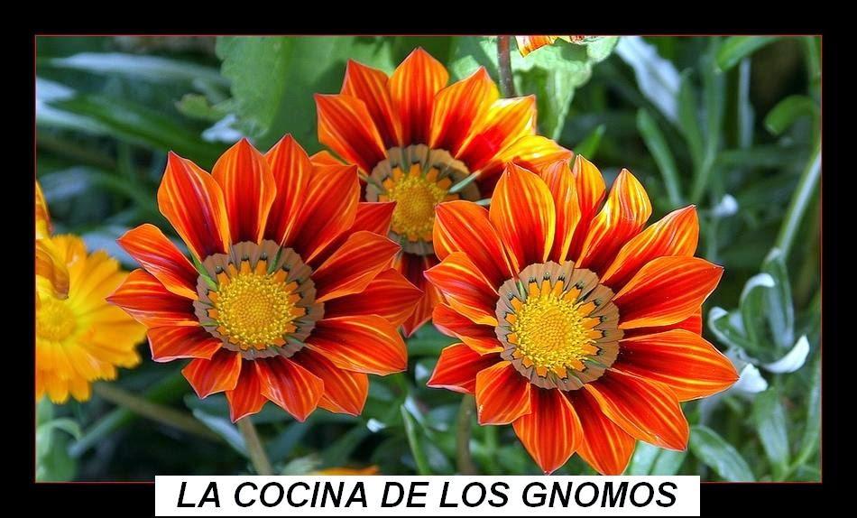 LA COCINA DE LOS GNOMOS