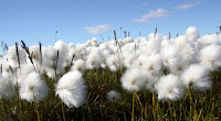 Fields of Organic Cotton