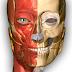 تحميل برنامج علم التشريح للاندرويد  AnatomyLearning