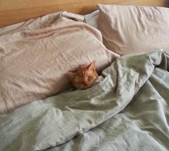 Funny cats - part 96 (40 pics + 10 gifs), cat pictures, cat sleeps in bed