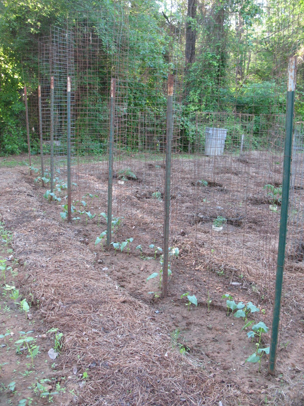 Pole Bean Trellis Ideas Part - 44: Sensible Survival