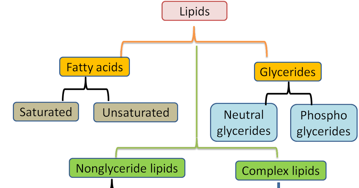 an analysis of the main classes of lipids a hydrocarbon type