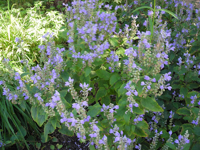 Mit lille gods: mine skønne blå blomster !!!