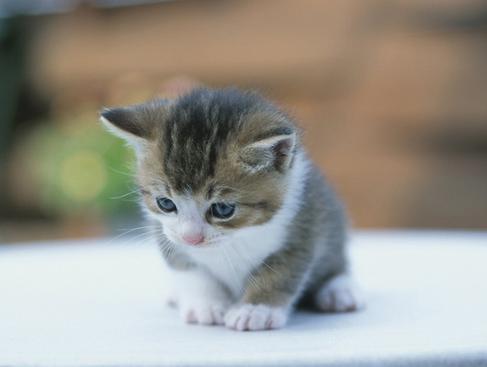 Foto Kucing Lucu Imut dan Menggemaskan 25