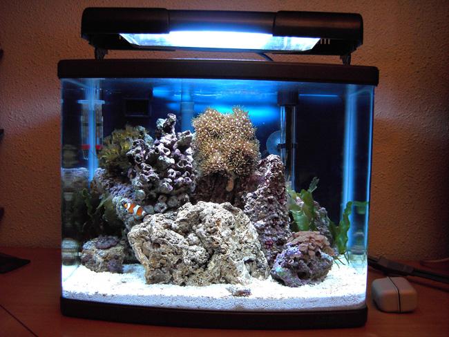 Astratoneti reef rescatando antiguos proyectos for Calentador acuario