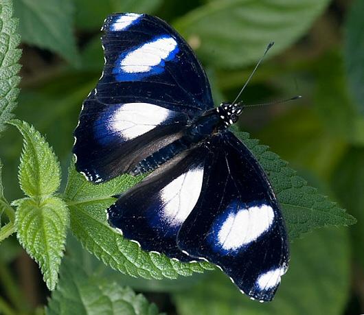 IL GUARDIANO DEL FARO: FOTOGRAFICO - Farfalle 2