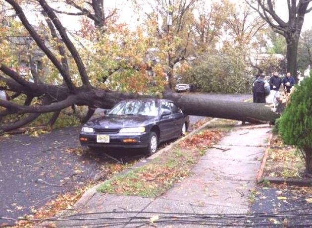 Hurricane Sandy Damaged Trees