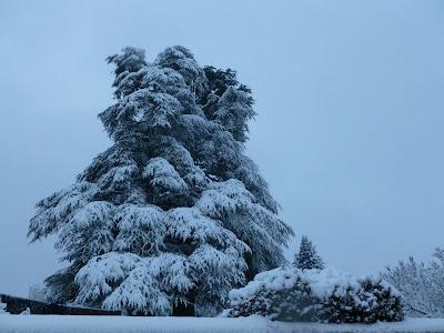 Episode neigeux neige