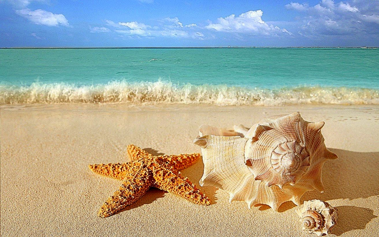 Starfish Images Free Download Beach Hd Wallpaper