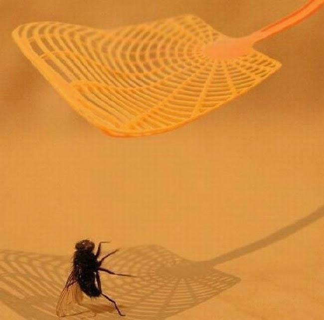 Оказывается, мухи за секунду до смерти танцуют