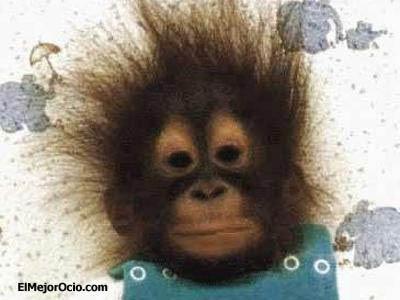 Fotos graciosas de monos