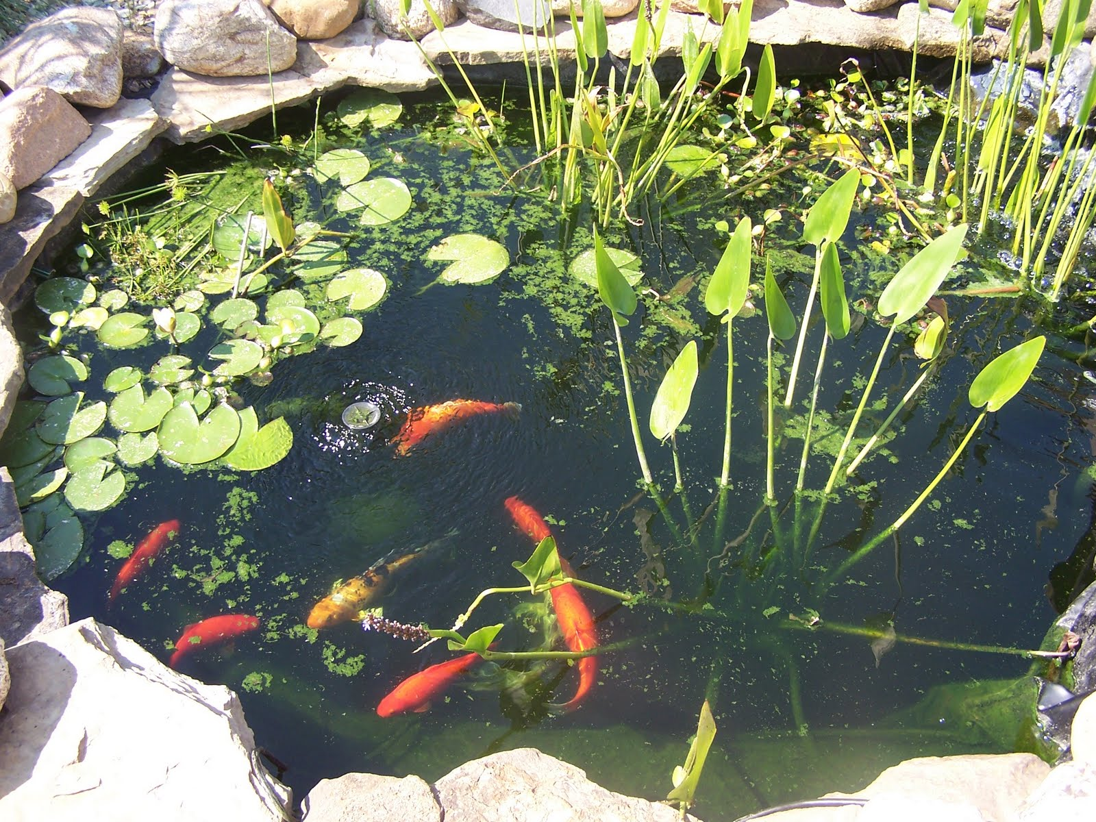 Pond liner blog how koi pond kits make your life easier for Fish pond materials