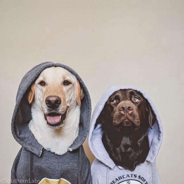 Havalı Köpek