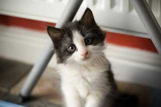 Cute Cat Pictures