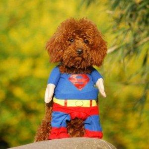 Teacup Puppies Costume