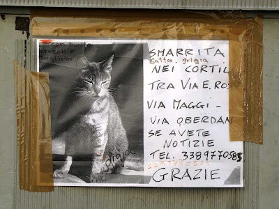 Lost cat sign, Livorno
