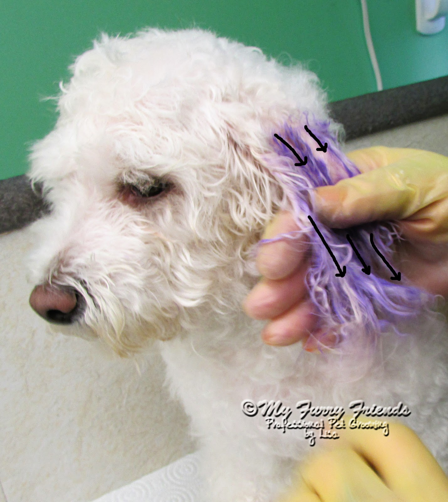 Pet Grooming The Good The Bad The Furry Repair Groom And A