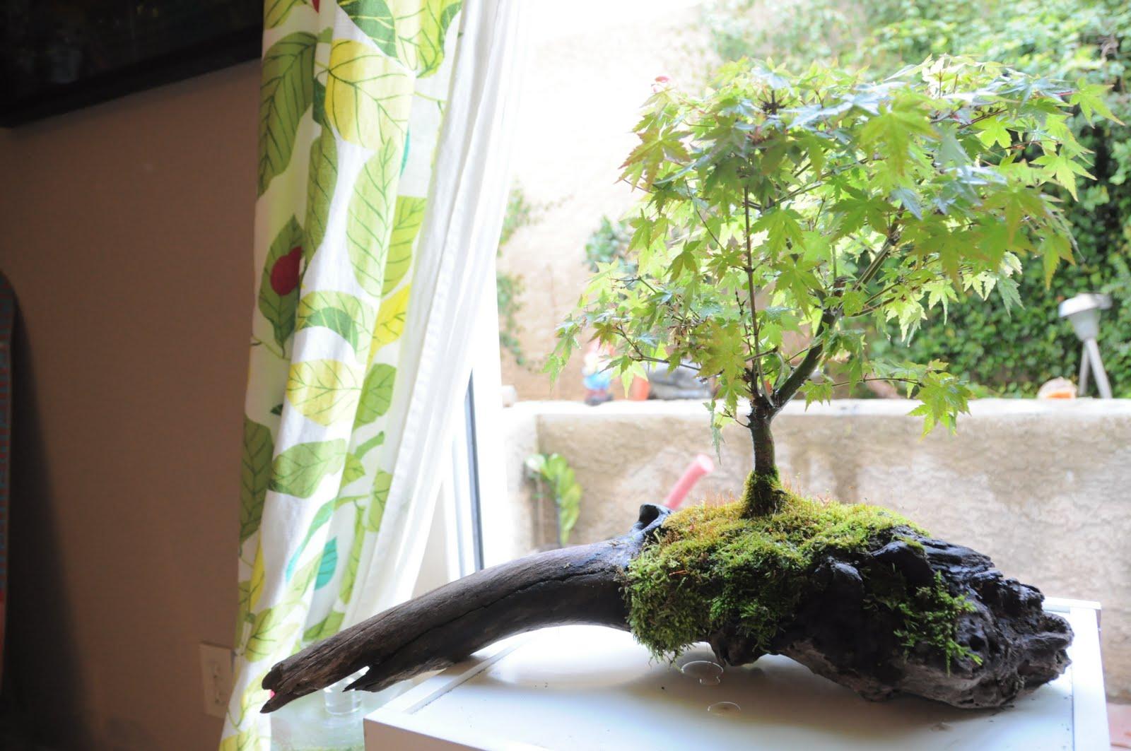 Bonsai Tree 20 Excellent Bonsai In Terrarium Inspirations