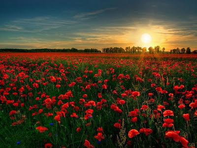 Foto campo de flores