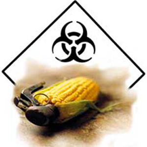 Monsanto Toxic GM bT Corn
