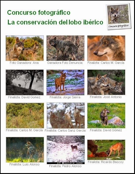 https://picasaweb.google.com/ecologistasenaccion.org/ConcursoLobo?feat=flashalbum#