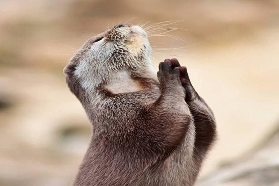 Most Beautiful Animal Praying Wallpaper ~ Charming ...