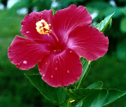 Rüyada Anber Çiçeği Görmek