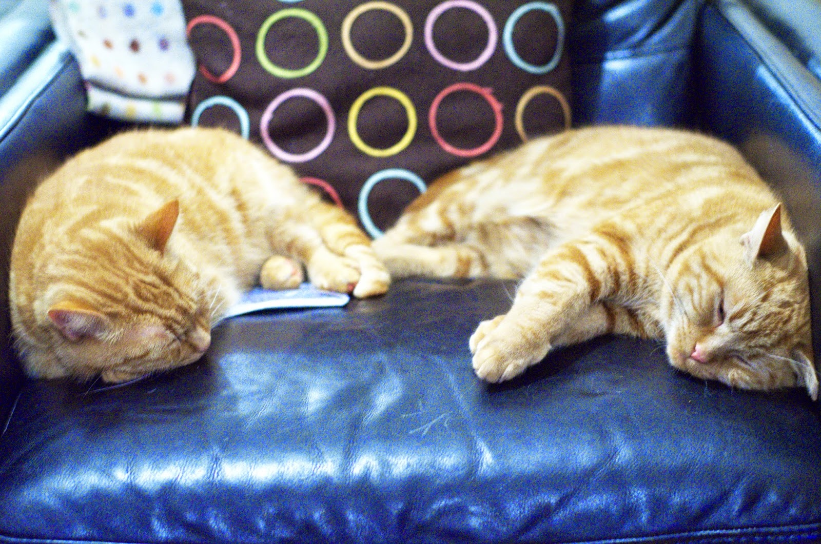 Adopted Cats. Ginger cats sleeping