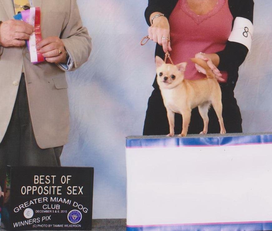 My Chihuahua Girl