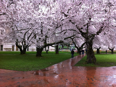 Flowering cherry trees with brick paths cutting through grass