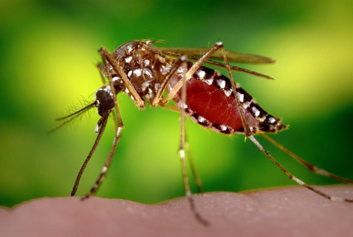Dengue, Malária e Febre Chikungunya
