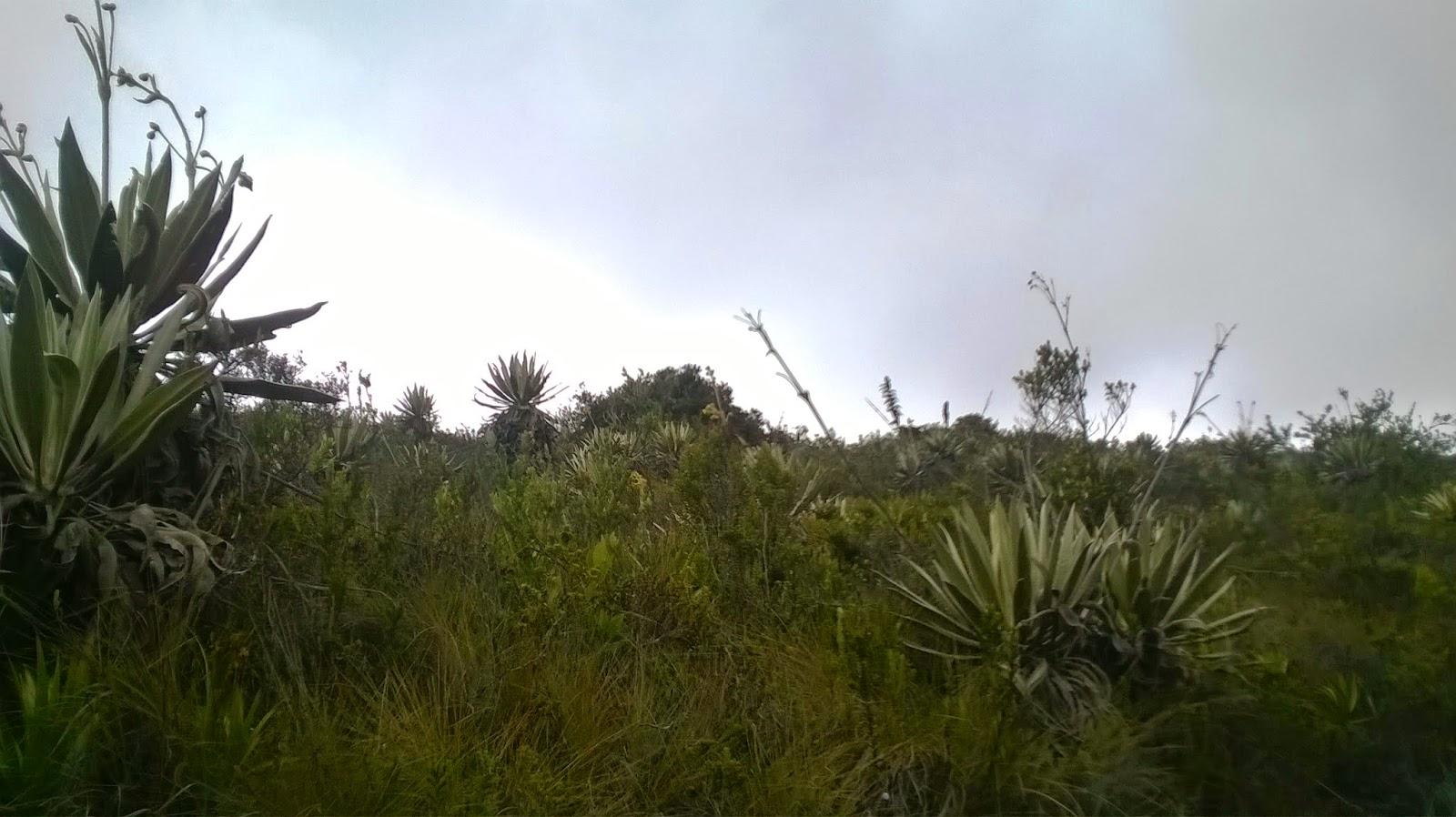 Especies de plantas jard n bot nico jose celestino mutis for Caracteristicas de un jardin botanico