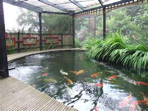 Kois for the big boys the importance of water quality in for Koi pond water quality levels