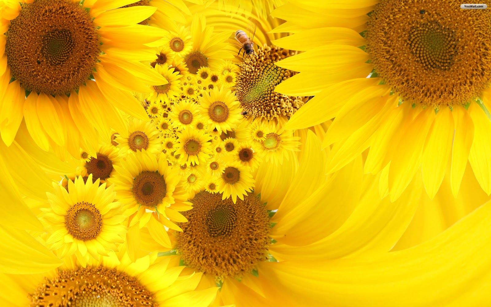 Sunflower Background - Mobile wallpapers