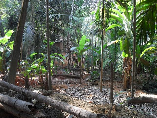 заброшенный участок в джунглях