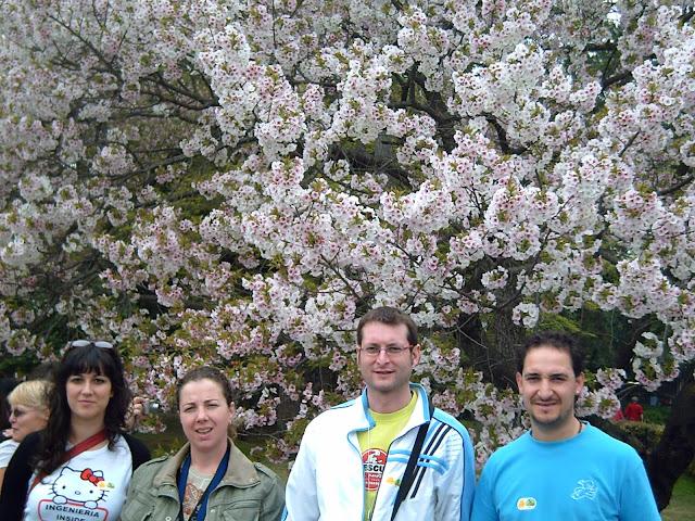 sakura japon japan hanami