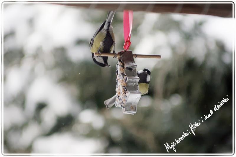 Jedzenie dla ptaków zimą, sikorki, i inne ptaki, Food for birds in winter, titmice, and other birds