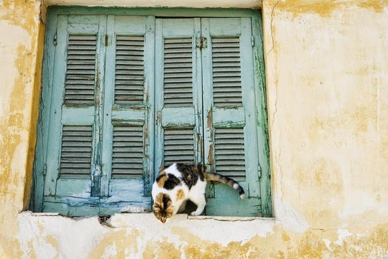 cat pictures athens