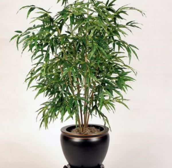 bamboo indoor plants5