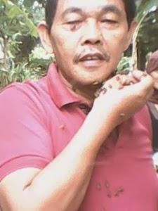 peternak madu hutan asli