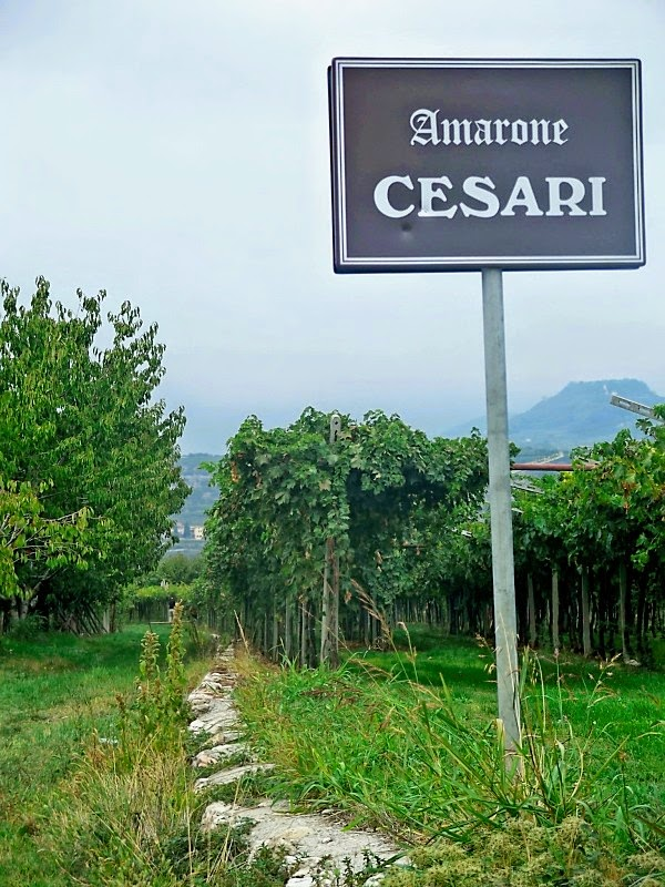 Cesari winery & Amarone