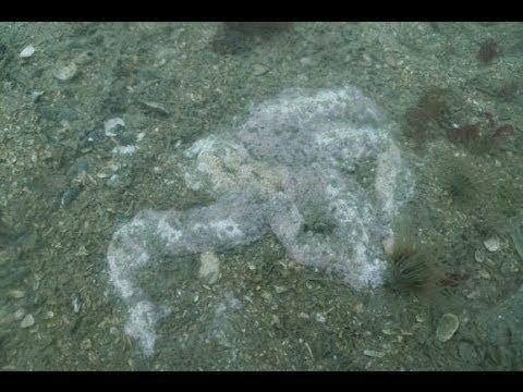 Thousands of Starfish Melting on the Ocean Floor of the Pacific and U.S Coast