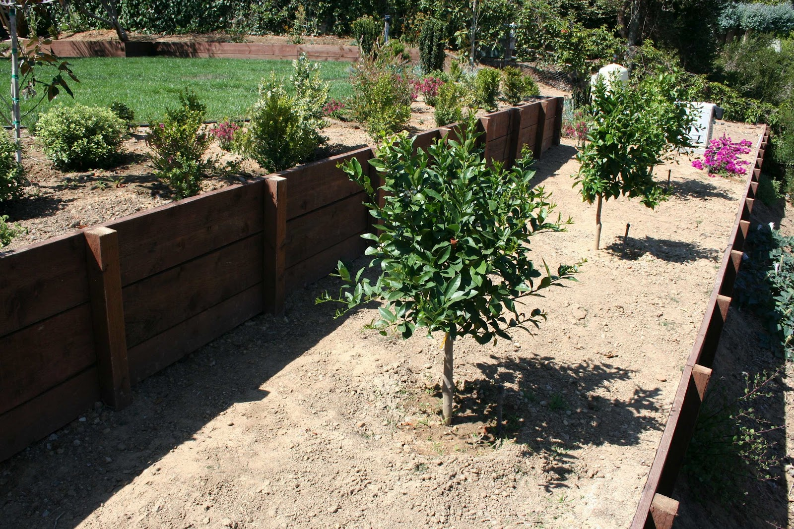 Good Fruit Trees For Backyard : Above Variety of fruit trees growing in backyard landscaping terrace