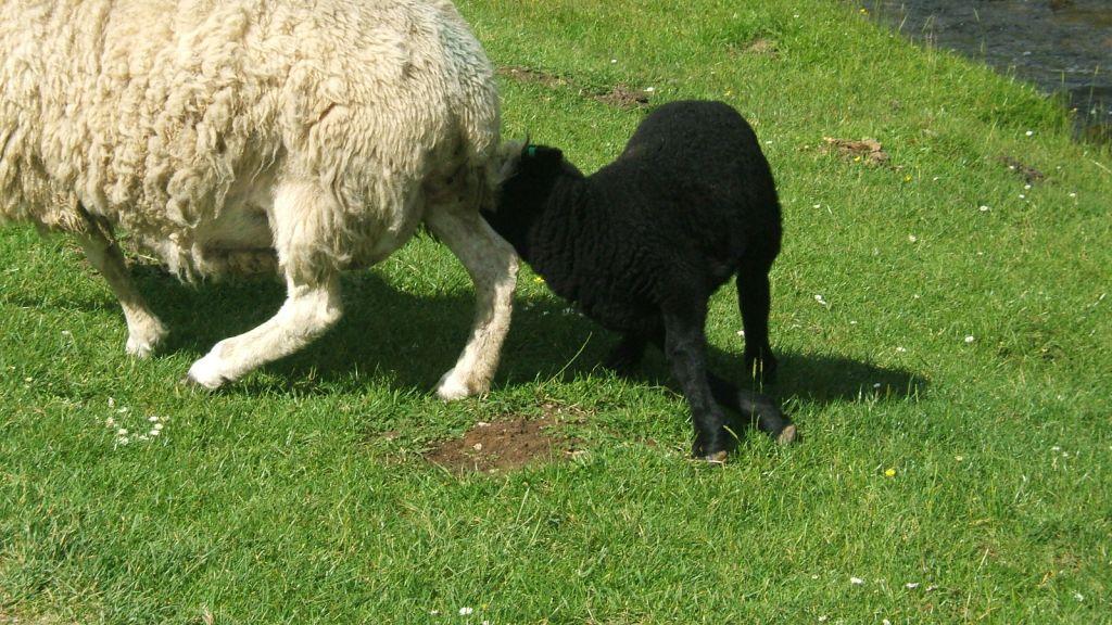 mum kids animals - photo #37