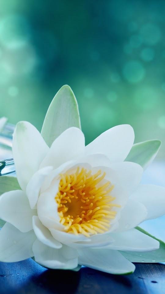 White Lotus Flower Galaxy Note HD Wallpaper