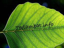 Fotosintesis Pada Tumbuhan Daun