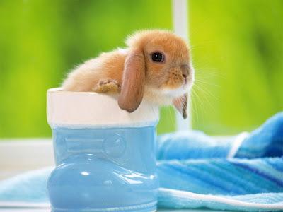 Thỏ con dễ thương, thỏ con đáng yêu, hình ảnh thỏ con ngây thơ