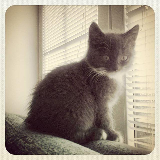 kot w domu, kot motek, kot maknety